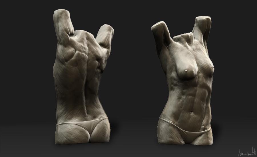 female_torso
